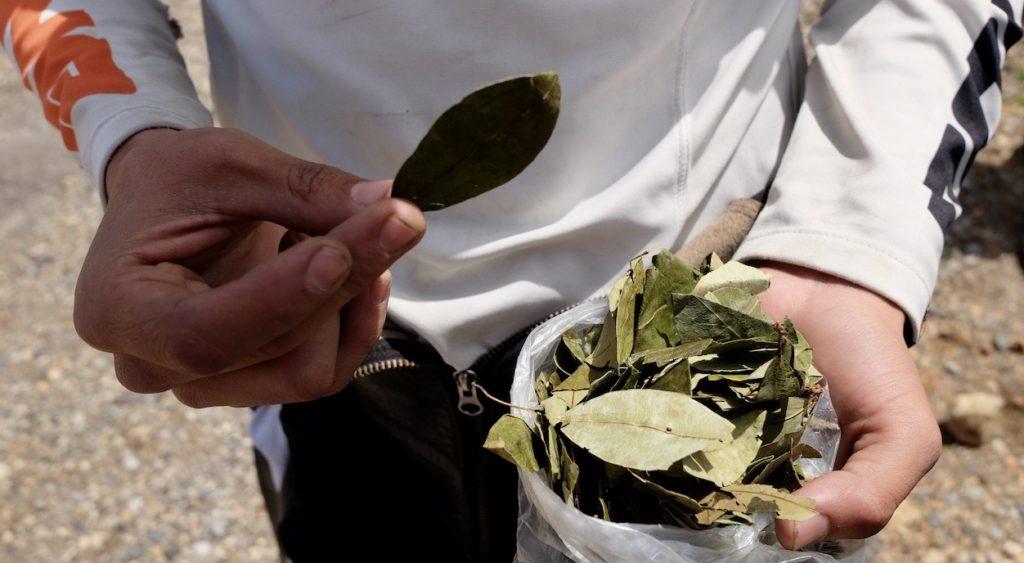 Coca Blätter für Pachamama